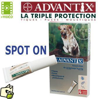 anti puce pour chien