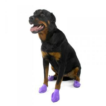 bottines chien