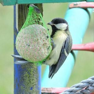 boule de graisse oiseau