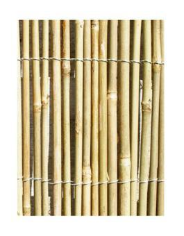 canisse bambou