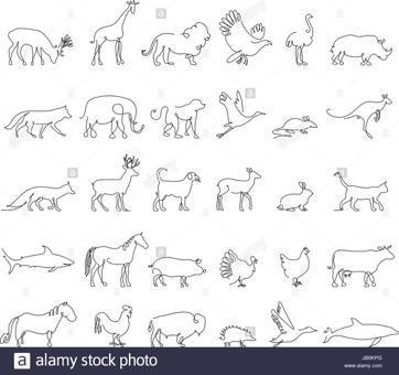chat en ligne cochon