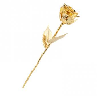 rose doré