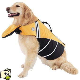 veste pour chien