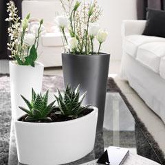 pot pour plante intérieur